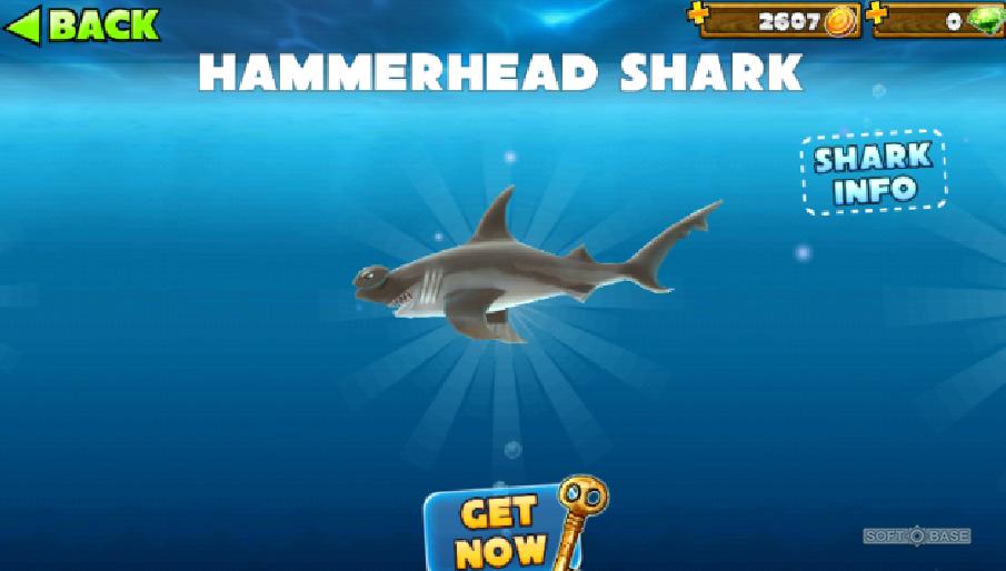 Скачать игру акула 4 на компьютер